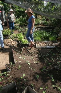Cuba permaculture