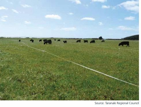 Cows on landfarm